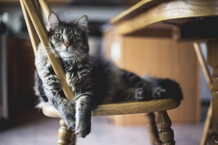 assurance santé pour chat sénior