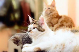 deux ou plusieurs chats sur un seul et même contrat